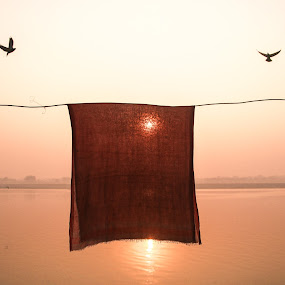 Life in wings. by Sayed Wasi Haider - Animals Birds ( frame, cloth, sunrise, boat, birds )