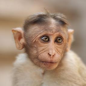 by Dhruv Ashra - Animals Other Mammals ( pwcbabyanimals )