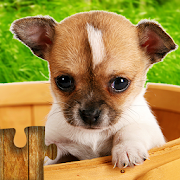 Dogs Jigsaw Puzzles Game - For Kids & Adults \ud83d\udc36