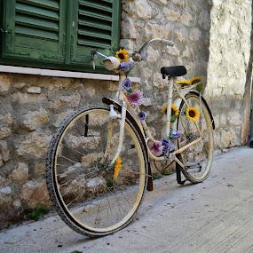 by Miho Kulušić - Transportation Bicycles ( croatia, old bike, transportation, flowers,  )