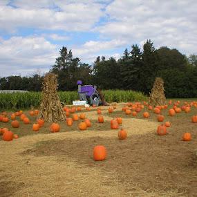 Long Island Pumpkins     by Jackie Sleter - Public Holidays Halloween ( orange, long island, pwcpumpkins, new york, halloween )