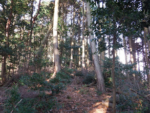 植林帯を進む