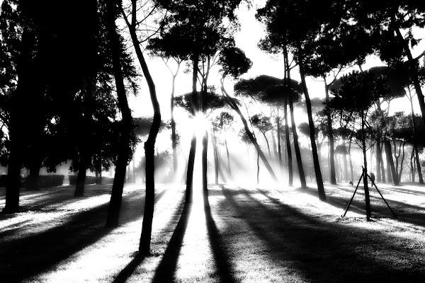Villa Borghese, mattina presto, Roma di davide fantasia