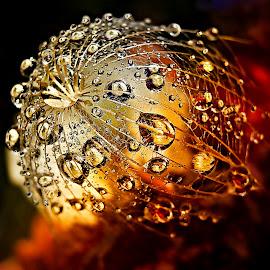 Love Fire by Marija Jilek - Nature Up Close Natural Waterdrops
