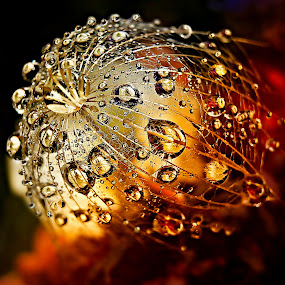 Love Fire by Marija Jilek - Nature Up Close Natural Waterdrops