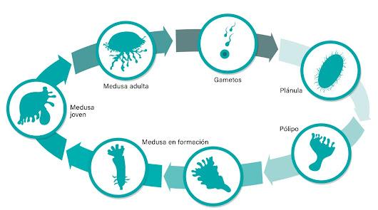 Unas sorprendentes habitantes se instalan este verano en el Aquarium de Roquetas