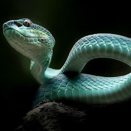 The Piver by Yan Hidayat  - Animals Reptiles