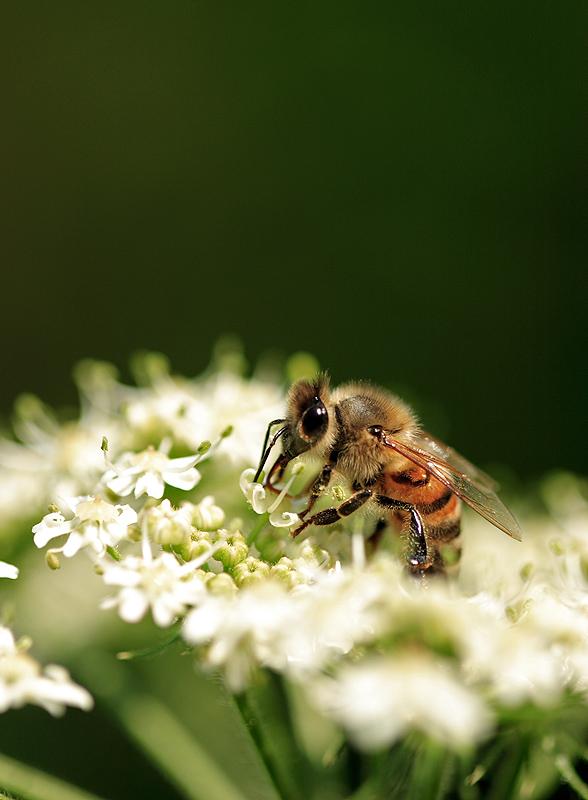 Pranzo tra i fiori di cyano