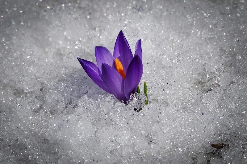 Quando la primavera si avvicina. di brunosma