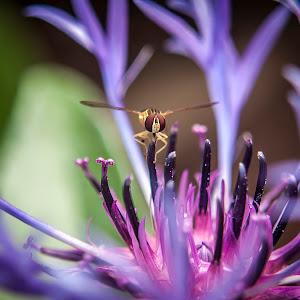 little-bee-023945.jpg