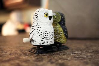 Photo: Love birds.