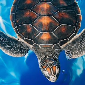 Honu of Hawaii by Teri Garrison-Kinsman - Animals Sea Creatures ( hawaiianturtle, maui, seaturtle, amphibian, mauioceancenter, greenseaturtle, turtle, hawaii, honu,  )