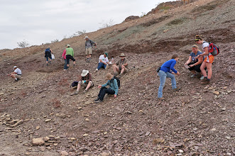 Photo: Each person has a different posture for collecting fossils.