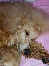 Photo: Müde aber glücklich schläft unsere Süße jetzt