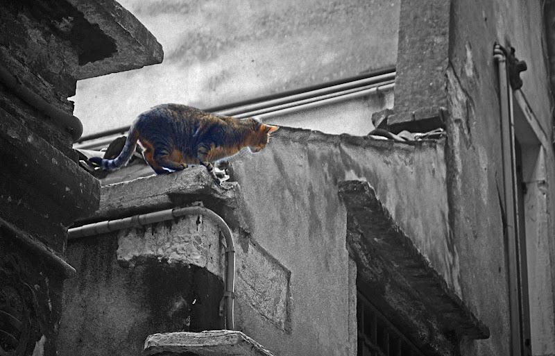 se non piove pioverà! di S. Fasan