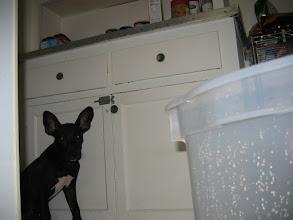 Photo: almost bath time