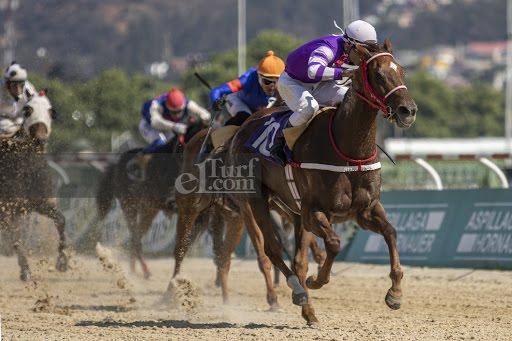 Remendona (Fusaichi Pegasus) conquista Handicap (1100m-Arena-VSC). - Staff ElTurf.com