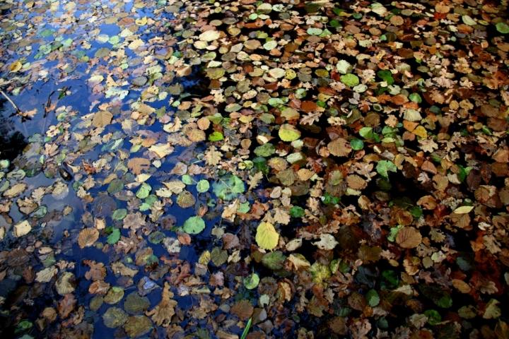 Le feuilles mortes di orange54