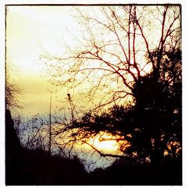 A crisp winter's eve by Bill Kratz - Instagram & Mobile Android ( sunset, clouds, evening, trees, crisp )