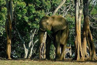 Photo: elephant at havana zoo. tracey eaton photo.