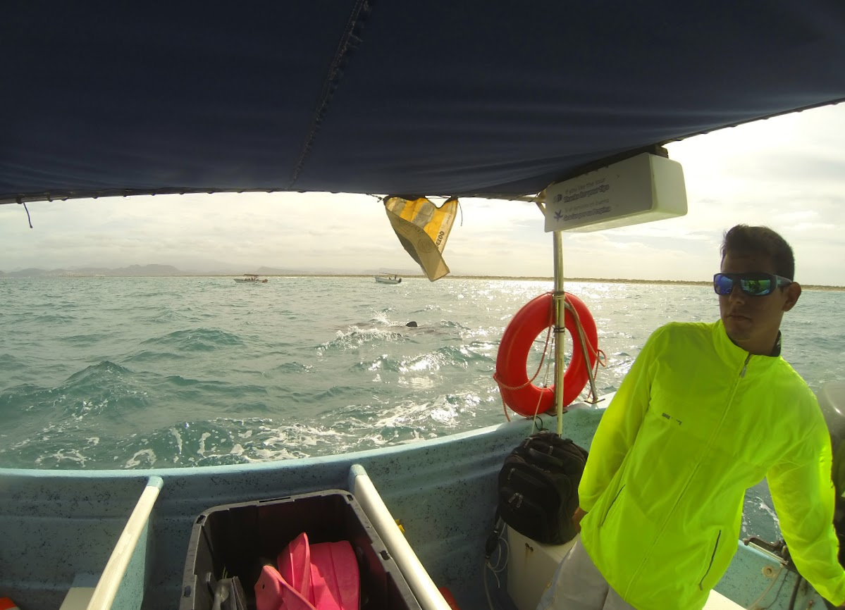 Navigating around the whale sharks