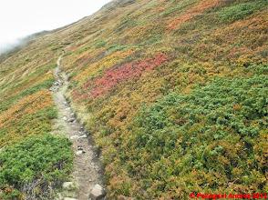 Photo: IMG_4081 i colori dell autunno sull appennino reggiano sullo 00