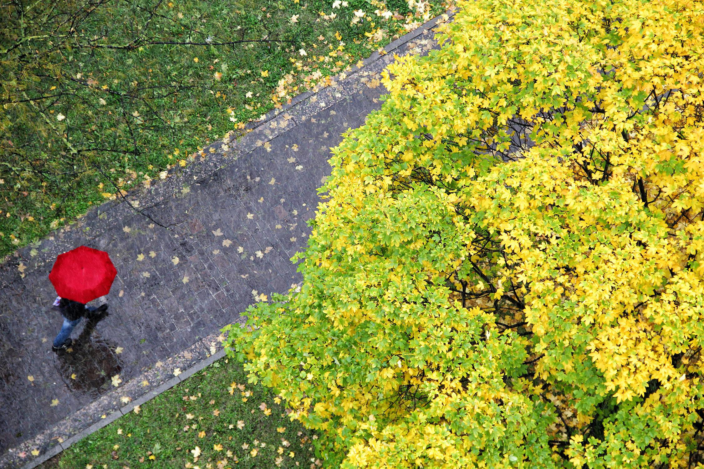 Pioggia d'autunno di Yoyo