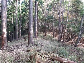 植林帯との境を進む