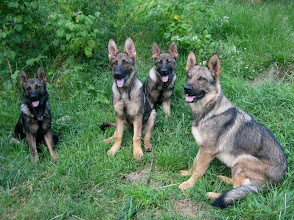 Photo: Ayla, Ask, Argus og Tasha