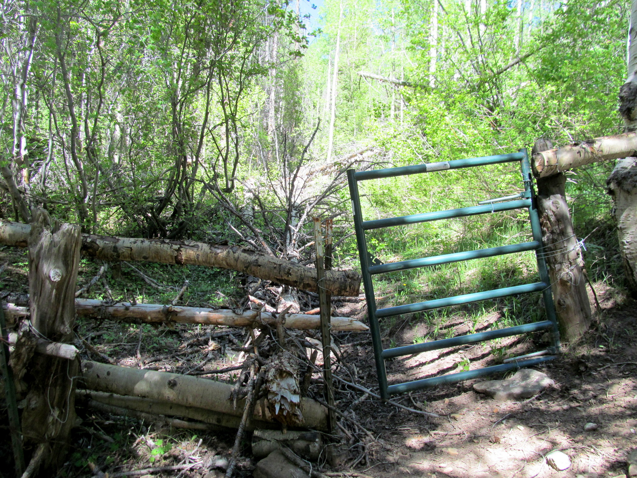 Photo: Fence and gate