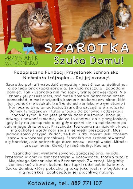 Firmówka Szarotka