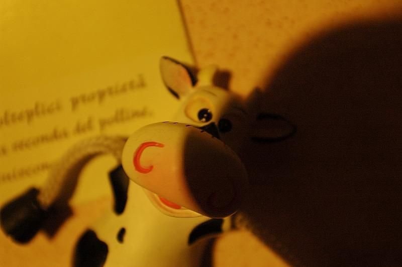 liberamente mucca... di @milabo