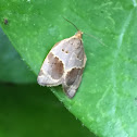 Clepsis dumicolana