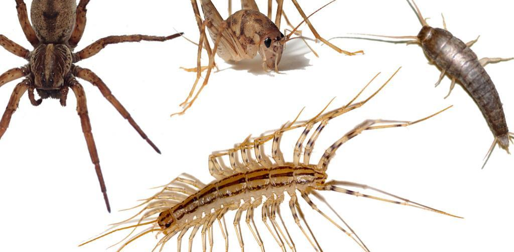 Bugging OUT: Pest controllers profit from 'insectophobia' – The ...