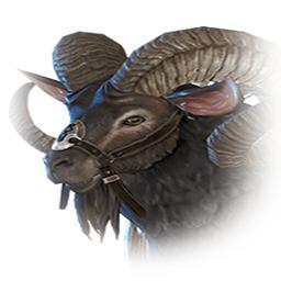 輸送用山羊