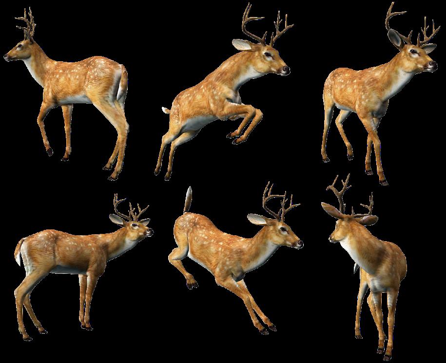 Deer Collection rwaQH6IB58oab5aV8Yyb
