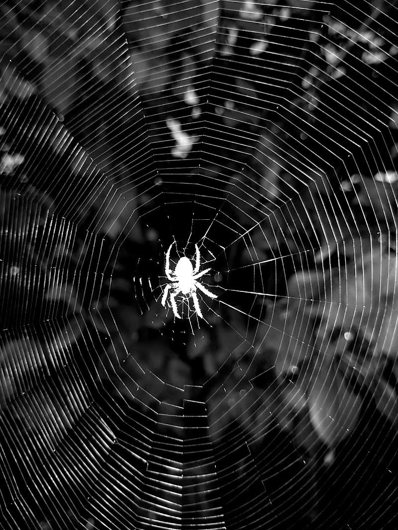 Cobweb di antonello_gioioso