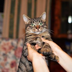 by Adela Rusu - Animals - Cats Kittens