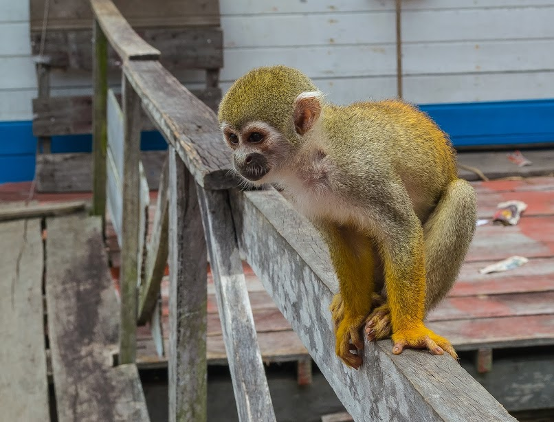 Страна диких (и не очень) обезьян. Краткий отчет о поездке в Бразилию, март 2018