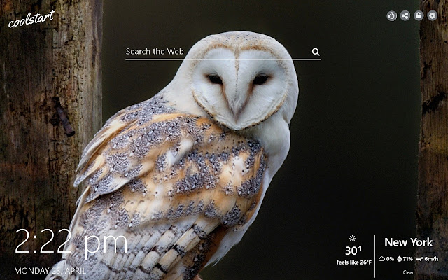 Owls HD Wallpapers Birds New Tab Theme