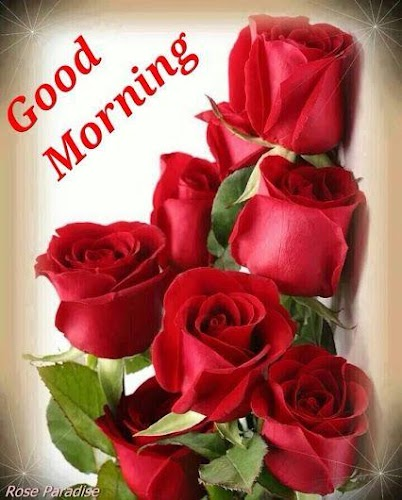 Download Good Morning Flowers Images Gif APK latest version app by