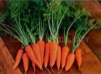 Carrot...... Tips