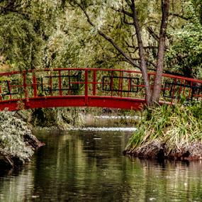 Japanese Bridge - San Francisco by Marie Browning - Buildings & Architecture Bridges & Suspended Structures ( red, plants, japanese bridge, landscape, san francisco,  )