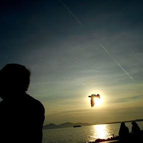 HIJA by Star Steel - People Street & Candids ( bird, sunset, shadow )