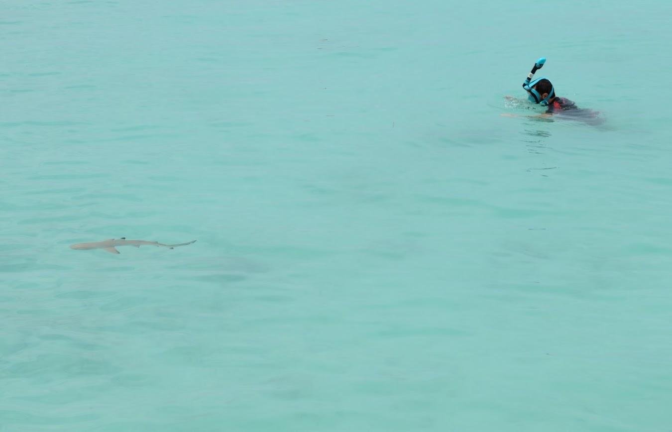 snorkeling maafushi tiburones