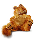 Garfield Cat Show Wallpaper & Garfield Movie
