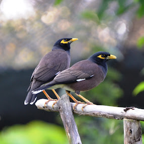 by Rengakrishnan Nagarajan - Animals Birds
