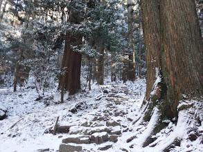 杉の巨木を抜けて