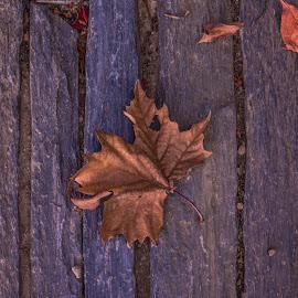 by David Barash - Nature Up Close Leaves & Grasses