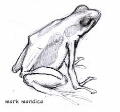 Photo: Dendrobates tinctorius | sketch
